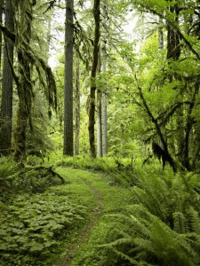 No, I did not take this image of the Hoh Rainforest.
